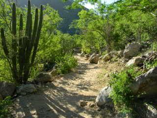 camino_sol_de_mayo_cascada_los_cabos_BCS